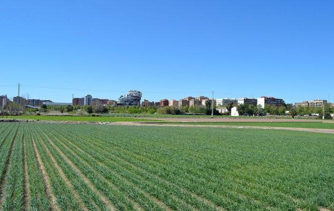 Un proyecto europeo para combatir los efectos del cambio climático sobre el paisaje utiliza la huerta de Valencia como laboratorio