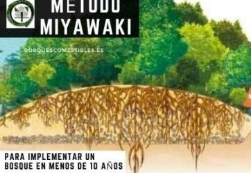 Método Miyawaki para hacer crecer bosques en menos de 10 años